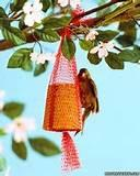 Pictures of Free Bird Feeders