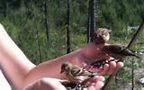 Hand Feeding Birds Photos