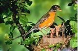 Backyard Bird Feeding Pictures