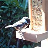 Images of Bird Feeder Post