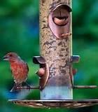 Wild Bird Feeding Images