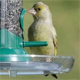 Rspb Bird Feeders Images