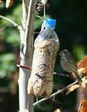 Pictures of Make Your Own Bird Feeder