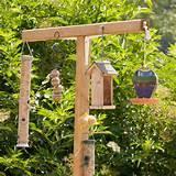 Photos of Wild Bird Feeding