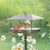 Backyard Bird Feeding Photos