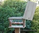 Bird Feeder Post Photos