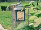 Peanut Butter Bird Feeder Pictures