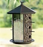 The Bird Feeder Photos