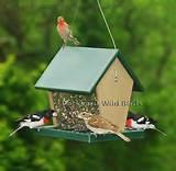 Pictures of The Bird Feeder