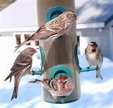 Images of Feed Birds