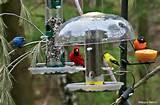 Feeders Bird Pictures