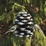 Photos of Pine Cone Bird Feeder