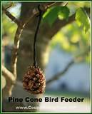 Pine Cone Bird Feeder Photos