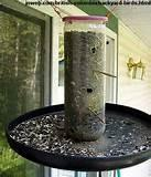 Homemade Bird Feeder Photos