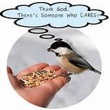 Bird Feeding Pictures