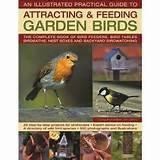 Feeding Garden Birds Images