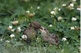 Feeding Bird Pictures