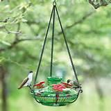 Photos of Bird Feeders