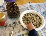 Pine Cone Bird Feeder Pictures