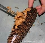 Pictures of Pine Cone Bird Feeder
