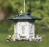 The Bird Feeder Pictures