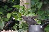 Photos of Feeding Garden Birds