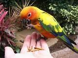 Images of Feeding Bird