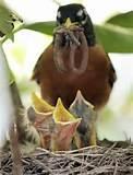 Feeding Bird Photos