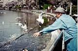 Feeding The Birds Photos