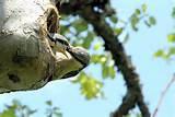 Images of Bird Feeding