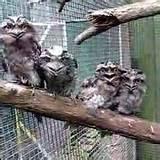 Photos of Bird Feeding