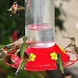 Photos of Feeding Bird