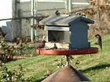 Images of Homemade Bird Feeder