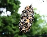 Images of Pine Cone Bird Feeder