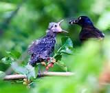 Bird Feeding Photos