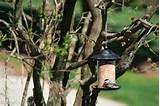 Images of Bird Feeders Aggressive