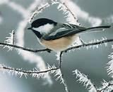 Winter Bird Feeding Images