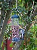 Garden Bird Feeders