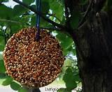 Bird Feeder Photos Pictures