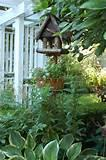 Pictures of Bird Feeder English